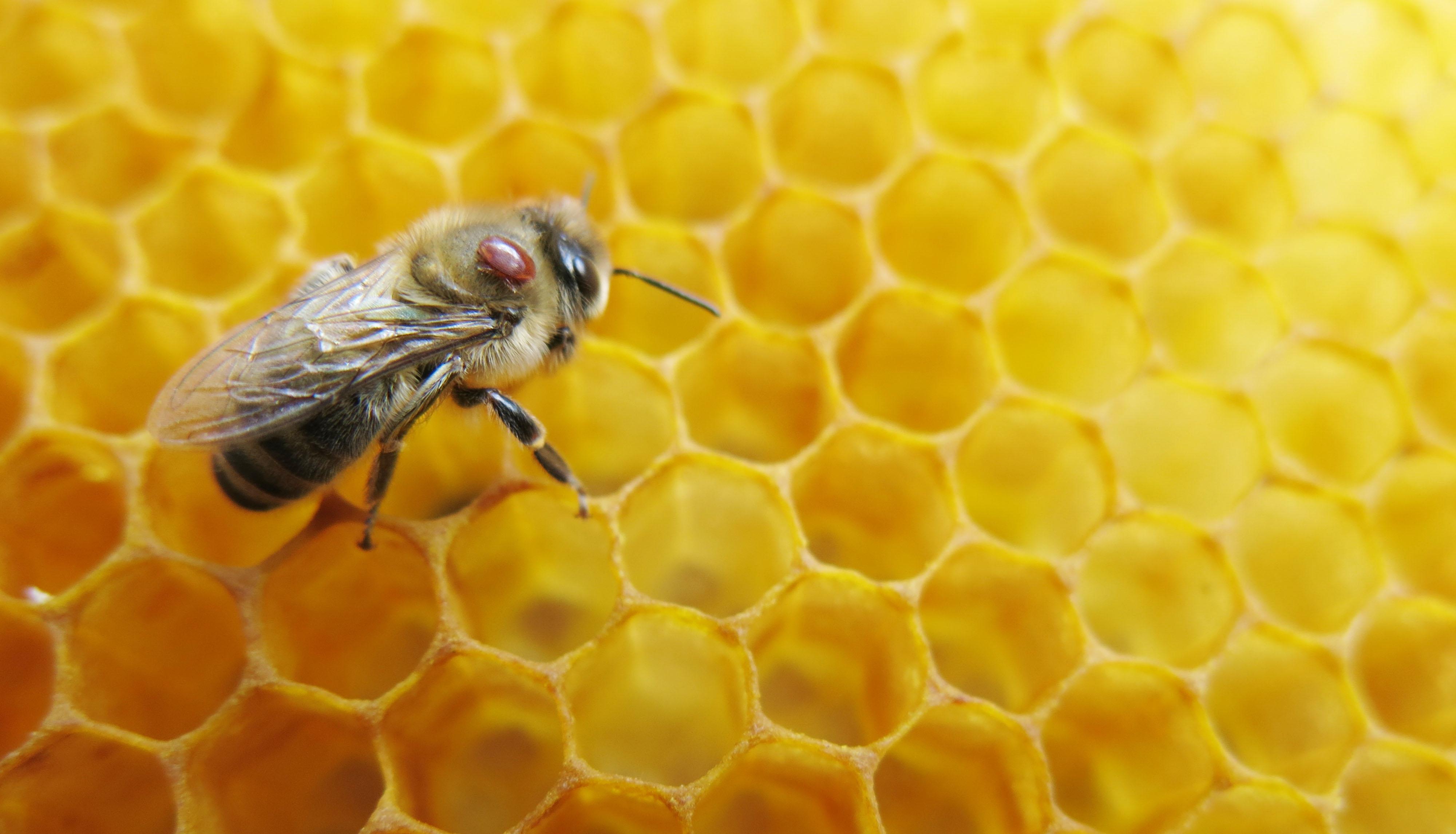 Hoe Verzorgt Een Imker Zijn Bijen Natuurwijzer