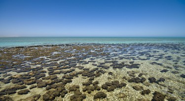 Stromatolieten in Shark Bay, Australië